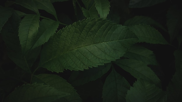Ciemnozielone liście tło abstrakcyjne zielone tekstury, tła przyrody, tropikalne liście