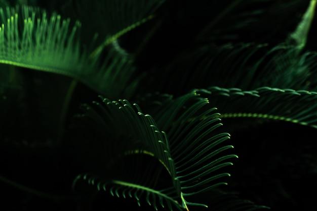 Ciemnozielone liście w ogrodzie. tekstura liścia. natura streszczenie tło.