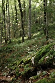 Ciemnozielony las z kamieniami i skałami zielonym tłem