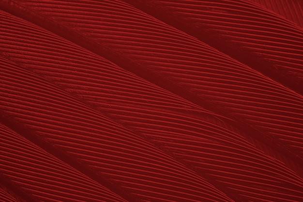 Ciemny czerwony bordowy pióro wzór tekstury tła