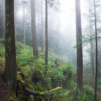 Ciemny mglisty las