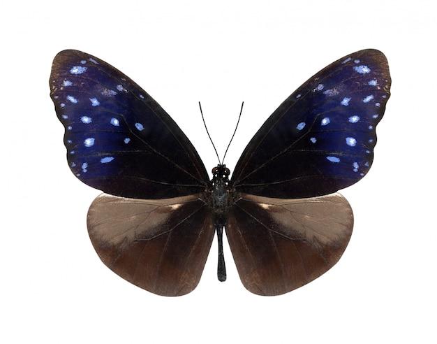 Ciemny motyl