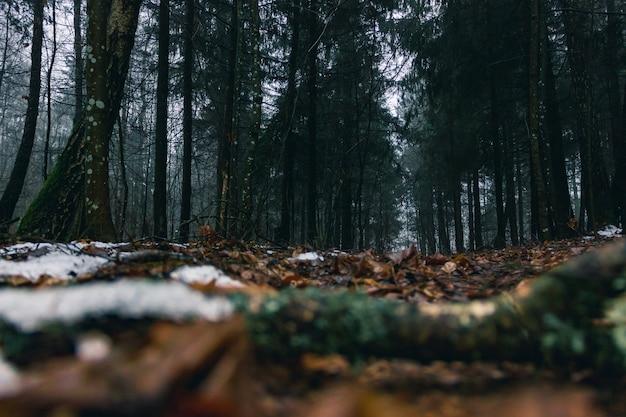 Ciemny naturalny wilgotny las iglasty w ciągu dnia. połamane drzewa, opadłe liście, mech i śnieg.