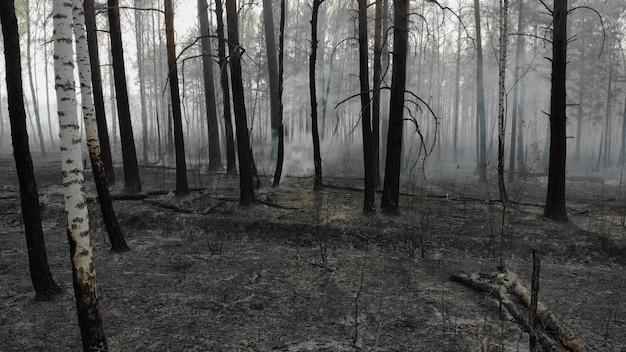 Ciemny, tajemniczy spalony krajobraz lasu. po pożarze las pokryty popiołem. dym unoszący się z ziemi po pożarze.