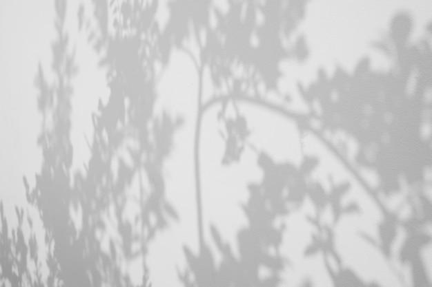 Cień liść na biel ściany tle