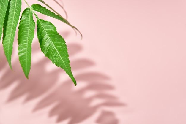 Cień liści i zielona roślina na różowym tle