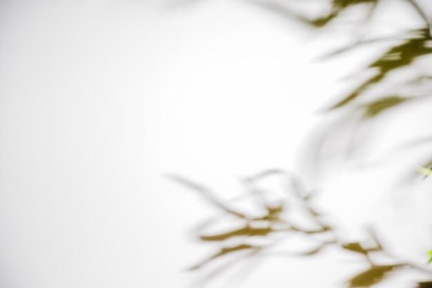 Cień liści na białym tle na białym tle