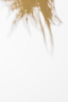 Cień liście na białym tle