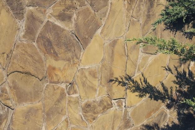 Cień z gałęzi jałowca na brązowym kamiennym murze