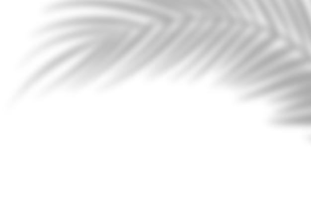 Cień z liści palmowych na tle białej ściany. białe tło, karton. abstrakcyjny obraz. koncepcja zwrotnika