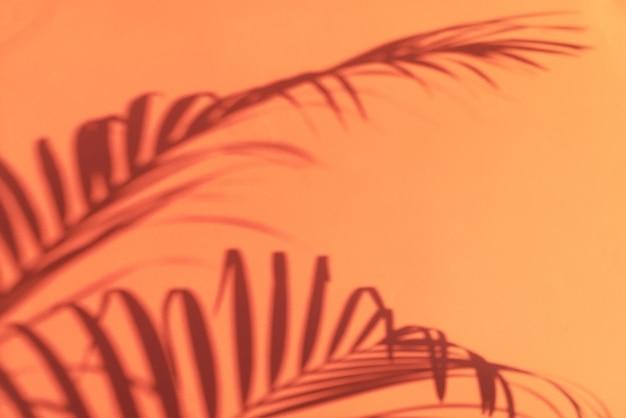 Cienie liści tropikalnych palm na tle pastelowych różowych ścian.