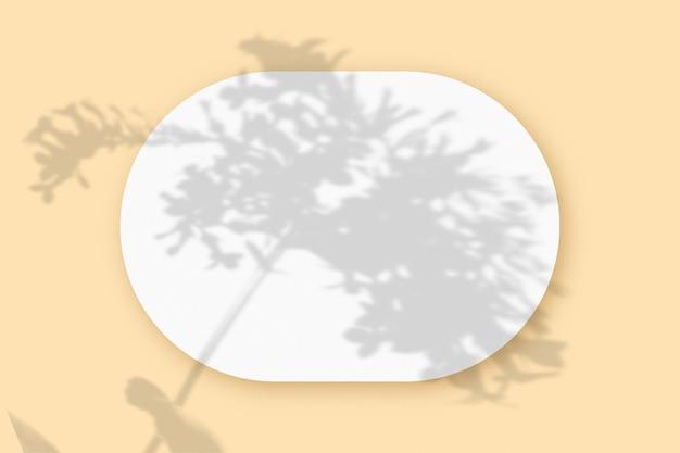 Cienie roślin nałożone na owalny arkusz teksturowanego białego papieru na beżowym tle stołu