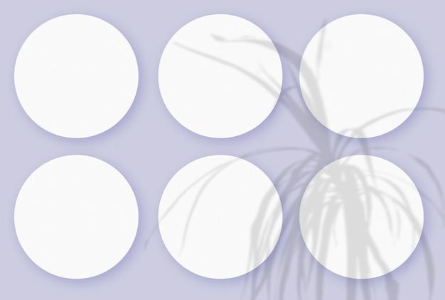 Cienie roślinne nałożone na 6 okrągłych arkuszy teksturowanego białego papieru na fioletowym tle stołu