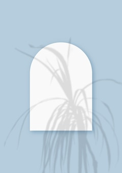 Cienie roślinne nałożone na arkusz w kształcie łuku z teksturowanego białego papieru na niebieskim tle stołu