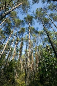 Ciepła i słoneczna pogoda w okresie jesiennym w lesie mieszanym, w którym rosną różne typy i typy drzew.