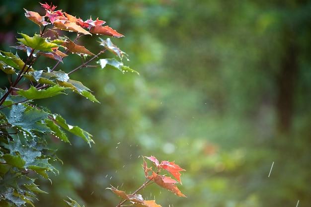 Ciepły letni deszcz w parku. krople wody spadają na gałęzie.