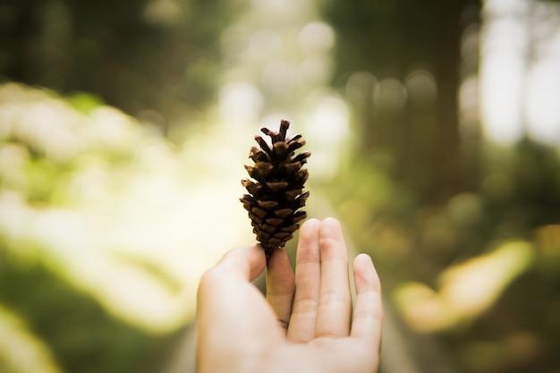 Ciepły obraz ręka kobiety trzymaj szyszka na jesienne klimaty