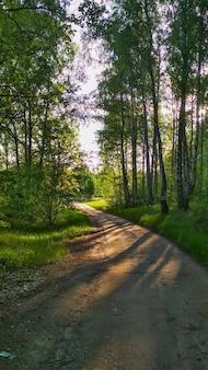 Ciepły zachód słońca w letnim lesie