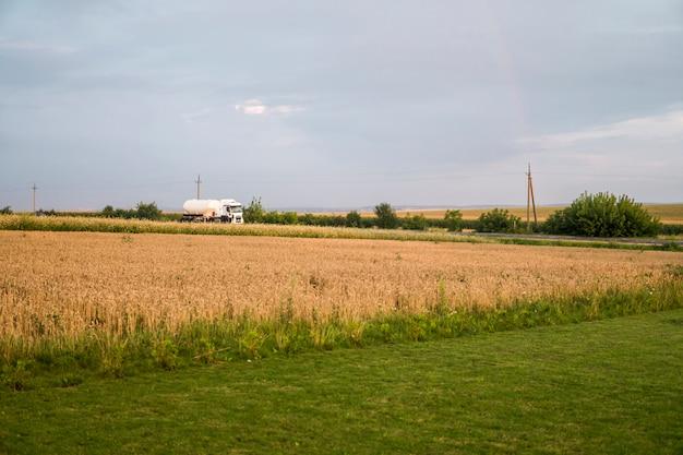 Ciężarówka na drodze poruszającej się przez pola pszenicy. transport.