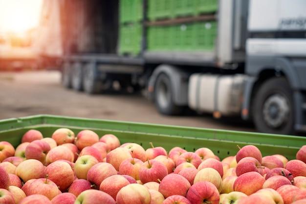 Ciężarówka załadowana kontenerami pełnymi jabłek gotowych do wysyłki na rynek.