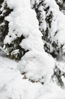 Ciężki śnieg nad gałęziami drzew z bliska