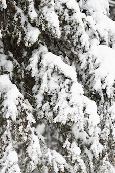 Ciężki śnieg nad gałęziami drzew