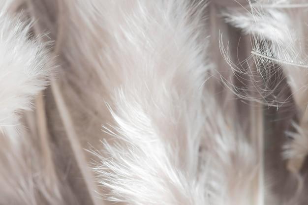Close-up białe pióra organiczne tło