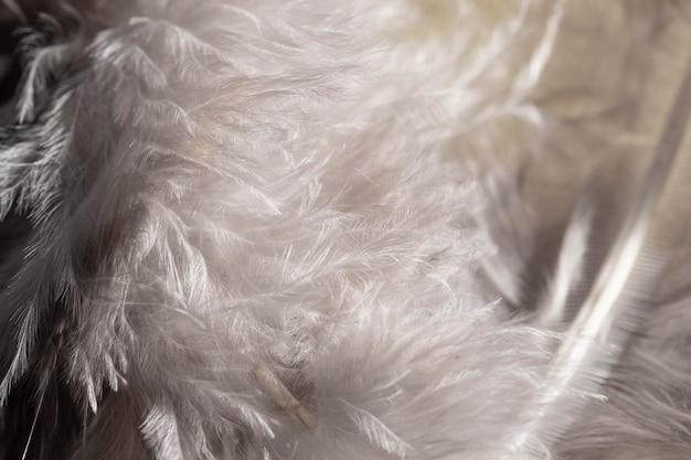 Close-up białe puszyste pióra