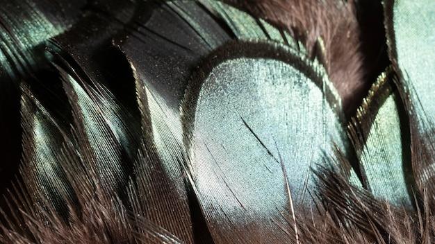 Close-up błyszczące pióra organiczne tło