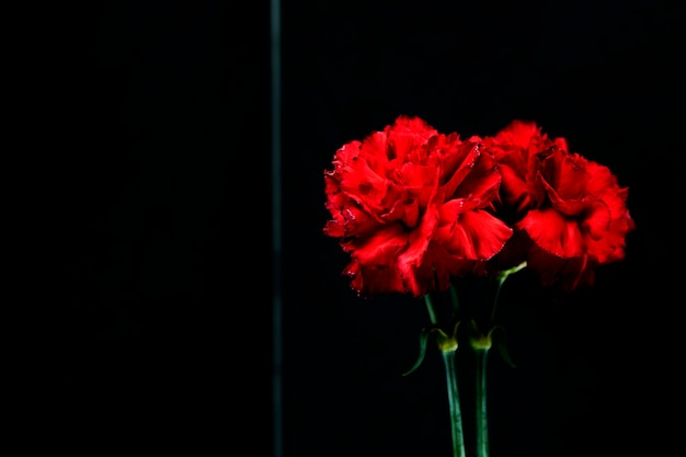 Close-up czerwonego kwiatu goździka odbicie na szkle