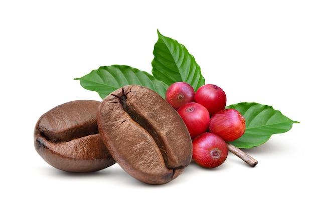 Close-up dwa palone ziarna kawy z czerwonymi ziarnami kawy i liśćmi na białym tle.