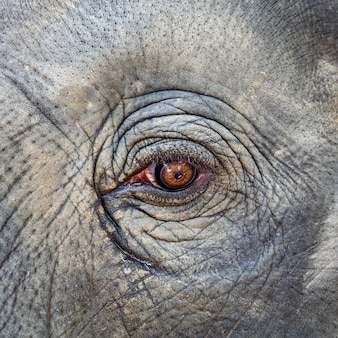 Close-up elephant eye tekstury tła