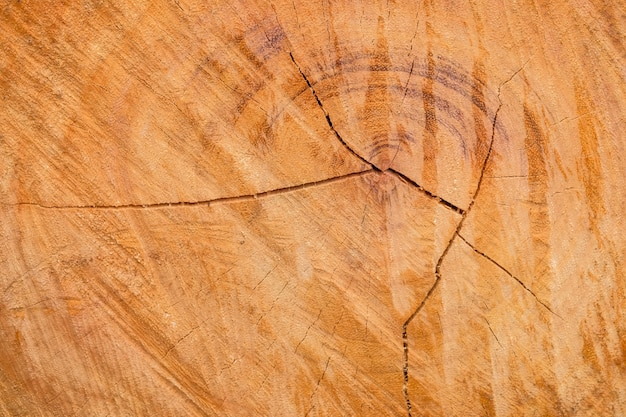 Close-up i szczegóły drewno, które jest cięte z ostrzem piły, drewno teksturowane tło
