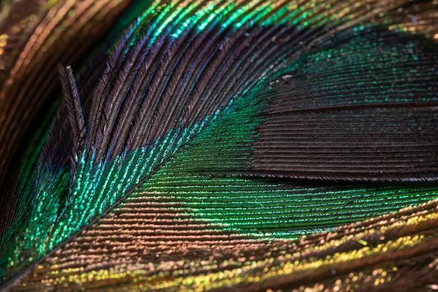 Close-up kolorowe piórko organiczne tło