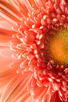 Close-up koralowych kolorowych roślin