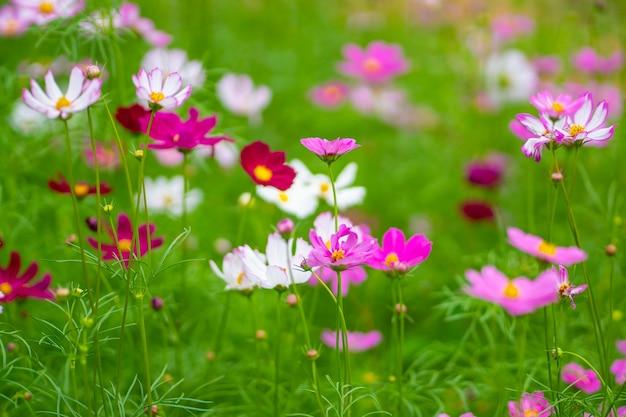 Close up kwiat kolorowy ruch rozmycie tła koncepcja natury i podróży