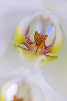 Close-up kwiat orchidei