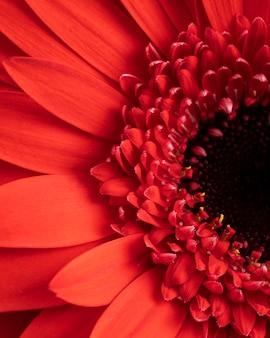 Close-up kwiat z czerwonymi płatkami