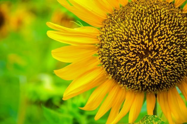 Close-up kwiatów w rozkwicie