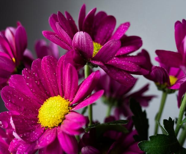 Close-up kwitnących wiosennych kwiatów