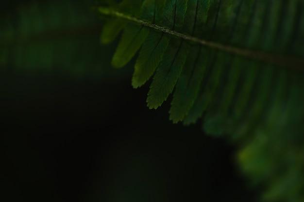 Close-up liść paproci