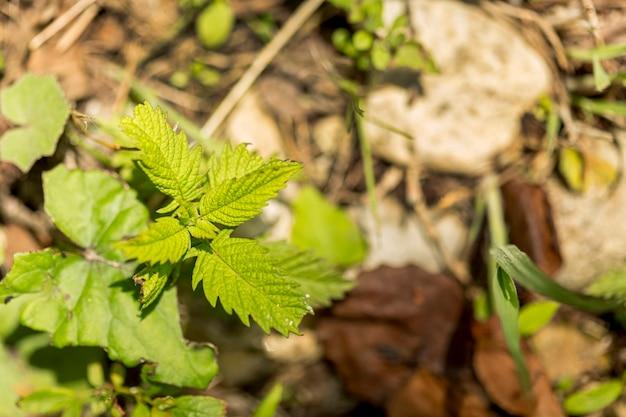 Close-up małe liście na zewnątrz