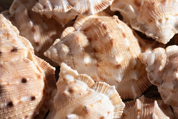 Close-up muszle organiczne tło