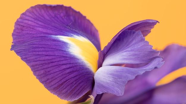 Close-up na całkiem purpurowy kwiat