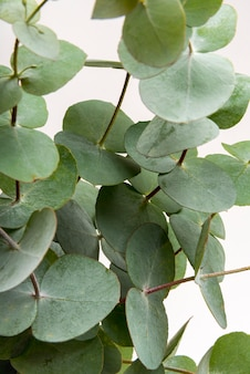 Close-up naturalnych liści koncepcji