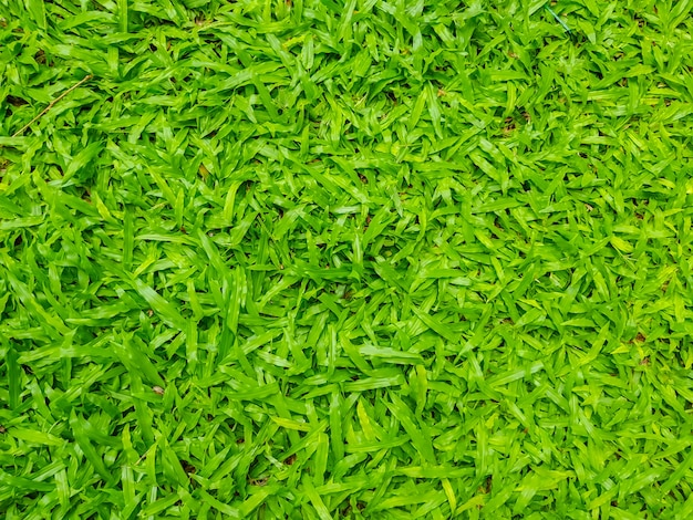 Close-up obraz świeżego wiosny zielona trawa.