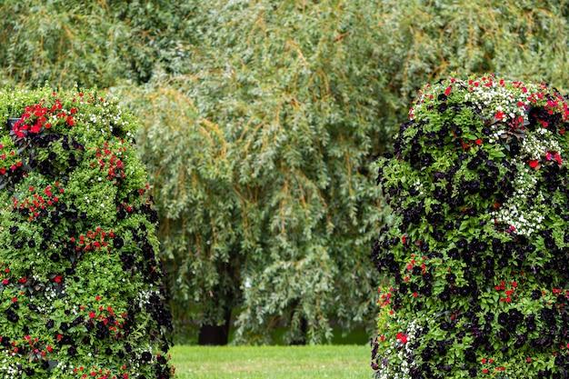 Close-up ozdobnych krzewów z kwiatami