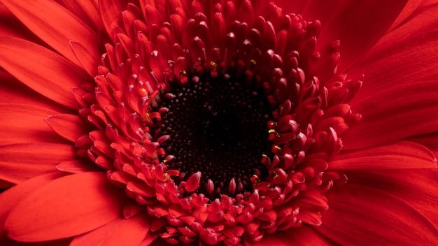 Close-up piękny czerwony kwiat