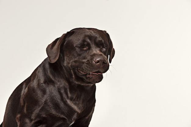 Close-up płacz twarzy psa