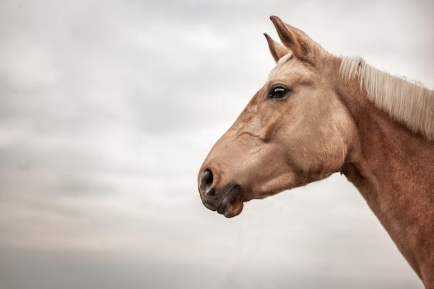Close-up portret brązowego konia w profilu na tle nieba
